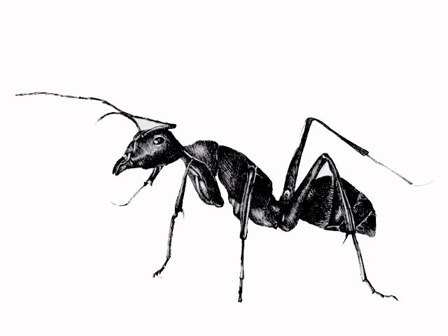 illustratie van een mier